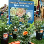Jubilee Sailing Trust and the Tenacious Rose