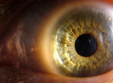 Can you help RNIB with eye research?
